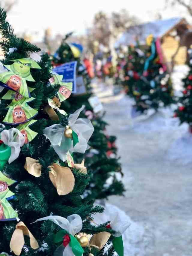 Christmas Tree in Kirov Square