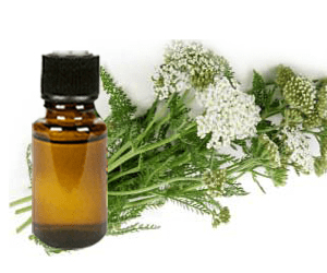 health-benefits-of-yarrow-essential-oil