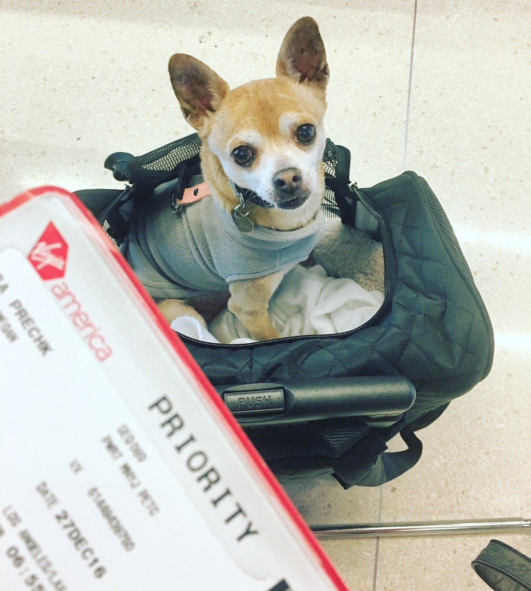 My ode to the best travel pet carrier ever
