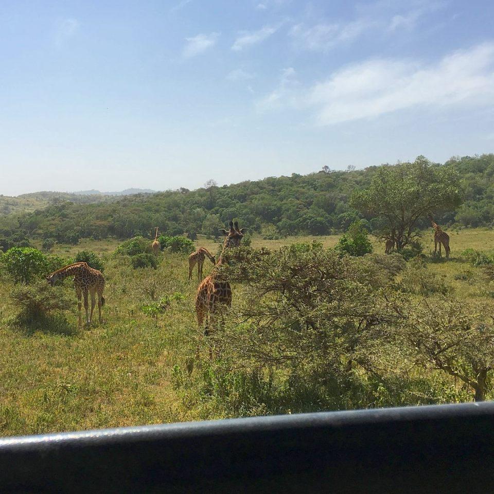 Giraffe spotting -- Our top 10 favorite safari honeymoon moments