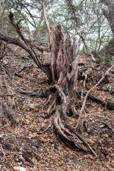 friedrich wilderness park san antonio-10 small