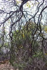 friedrich wilderness park san antonio-11 small