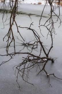 winter walk-10 small