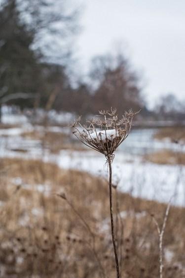 winter walk-21 small