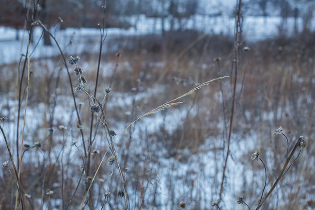 winter walk-25 small