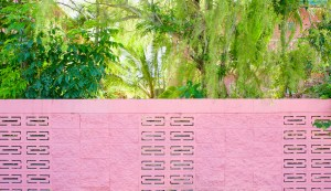 A pink-painted breeze block wall shows glimpses of greenery.