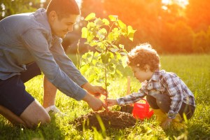 A father and son plant a small tree together.