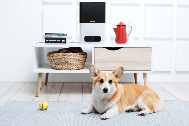 Petcube Launches Innovative Petcube Bites Treat Camera