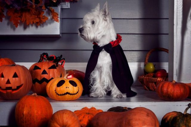 NRF: Halloween spending to reach all-time high of $10.14 billion this year