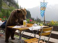 Bears-Drink-Cabin-Beers