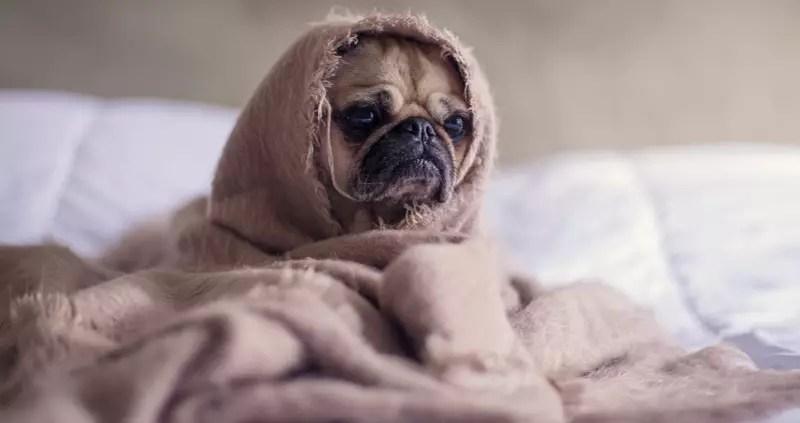 ahorrar en facturas de casa ponendose mas capas: perro inteligente con muchas capas