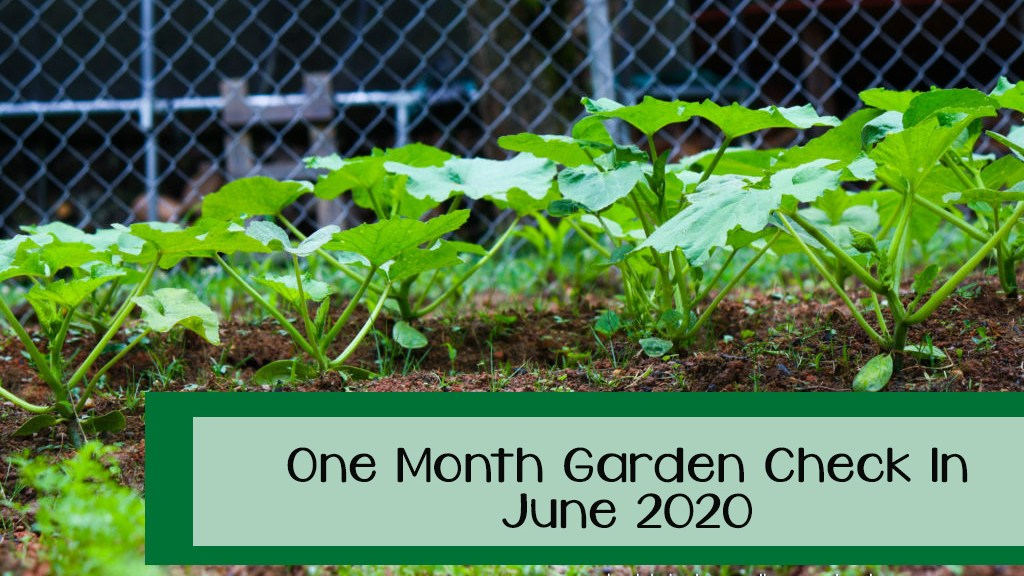 One Month Garden Check In- June 2020