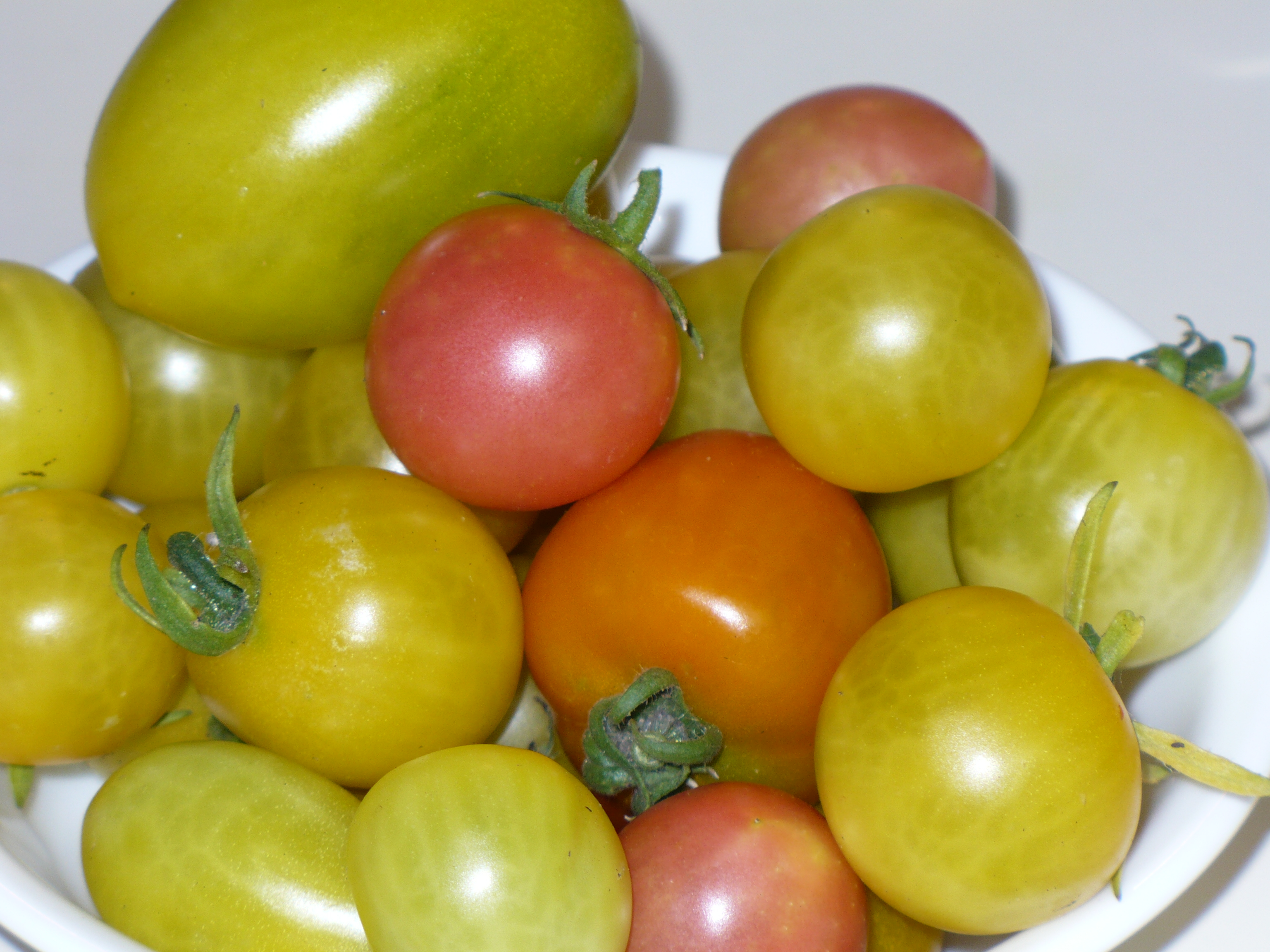 First Cherry Tomatoes