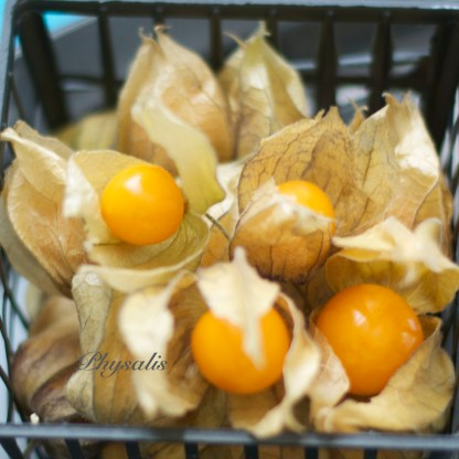 Physalis (peruvian cherry or cape gooseberry)