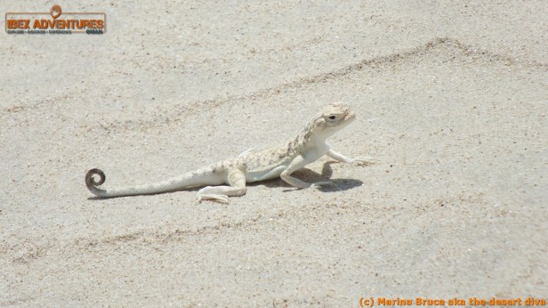 Neil caught this cute lizard out from it's burrow