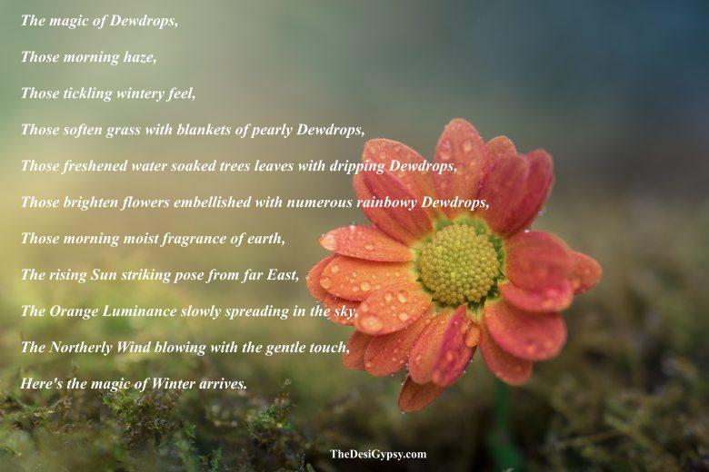 beautiful-bloom-blooming-355235