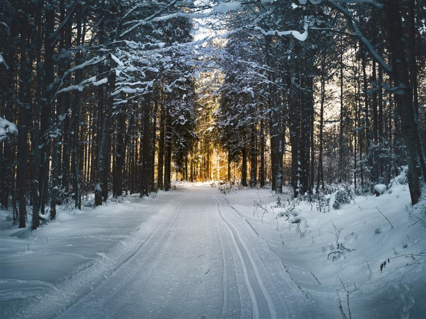landscape-photography-of-snow-pathway-between-trees-during-688660
