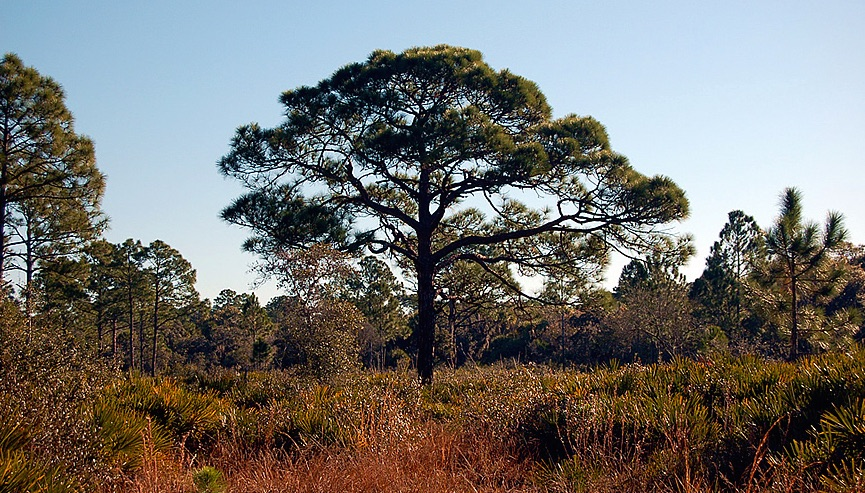 Pinelands Reserve