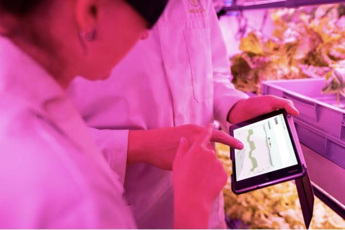 Scientists monitoring the vertical farm on a tablet