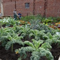 Let's Grow Akron has helped create 70 community gardens in Akron