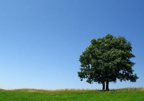 Socrates' Tree