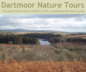 Dartmoor Nature Tours