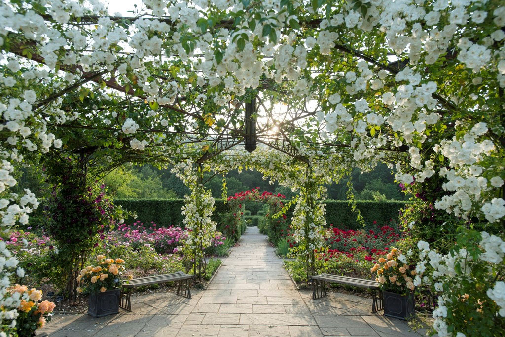 Queen Mothers Rose Garden at RHS Garden Rosemoor. Photo: RHS
