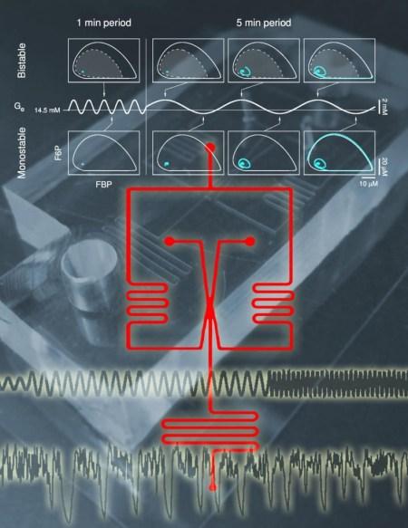 Composite diagramme illustrant le dispositif microfluidique utilisé dans l'étude,