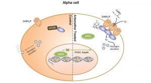 Photo of Abstract of Artemisinin Action in Alpha Cells