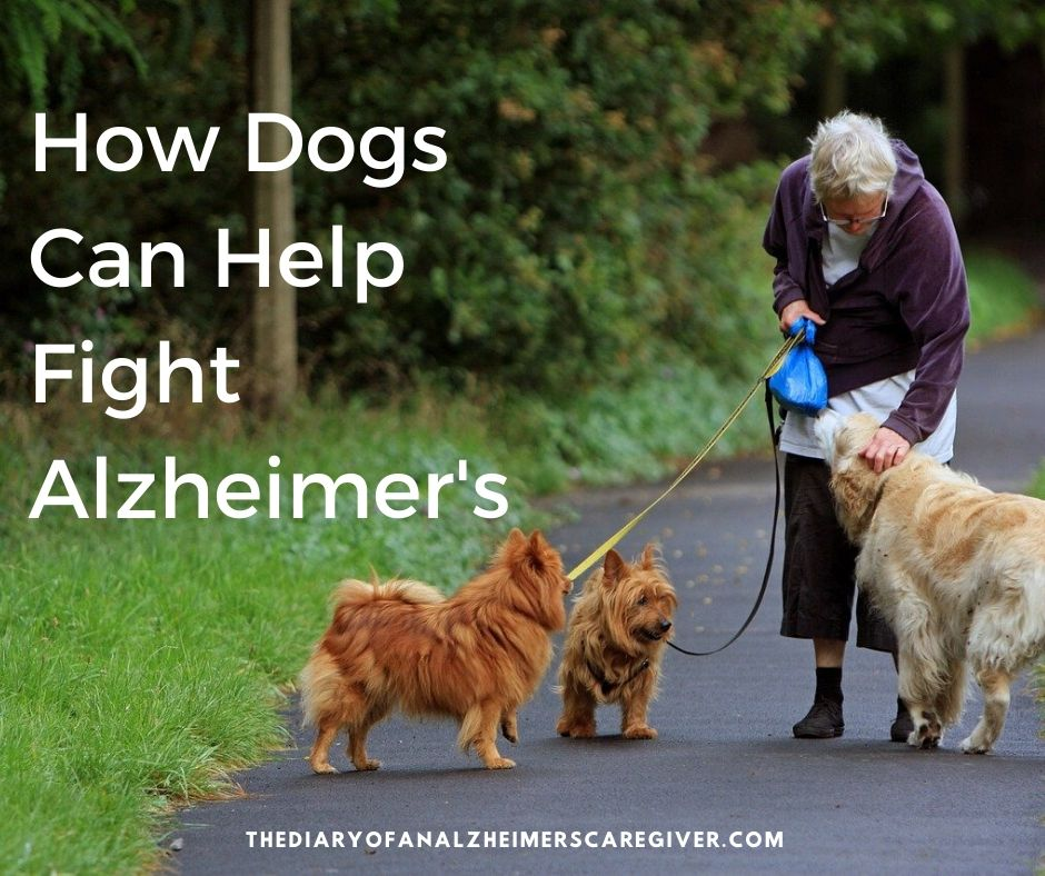 senior with dogs on a path