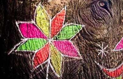 Damn the elephants! Full speed ahead!