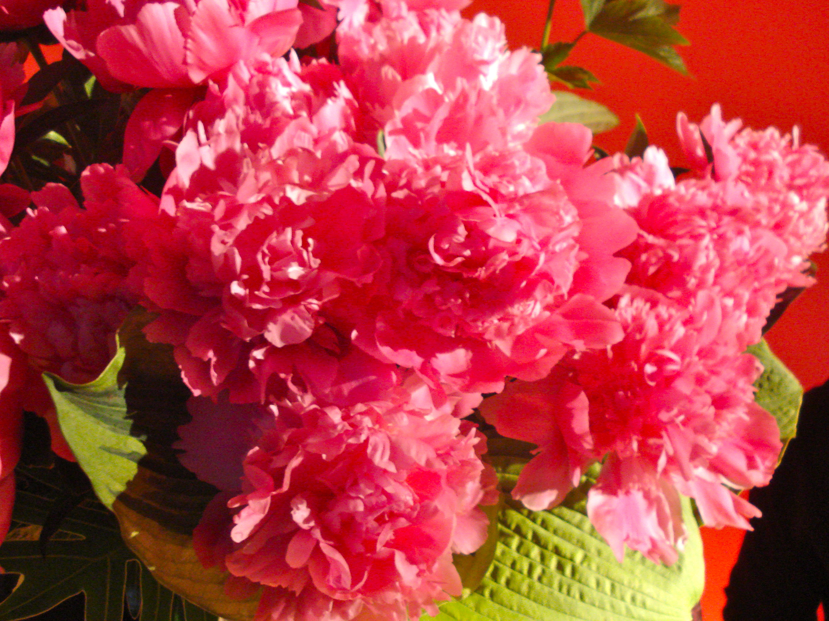 Extremely pink flowers.