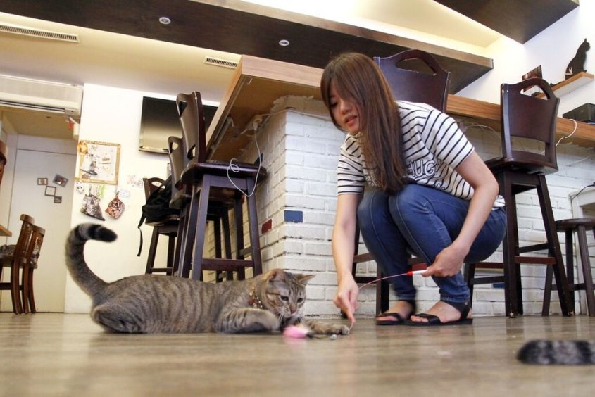 貓咪先生的朋友4