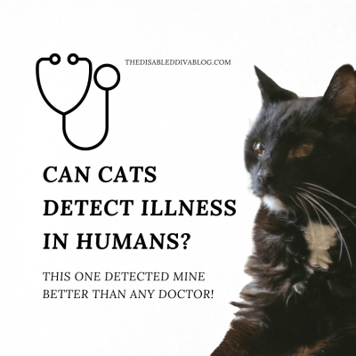 Can Cats Detect Illness In Humans