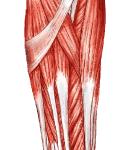 Random image: how-to-prevent-forearm-strains-nick-punto-photo