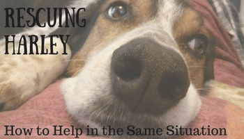 Rescuing Harley - Four Years Later (How to Help in the Same Situation) | Making My Home Happy
