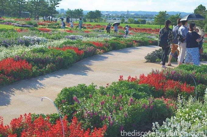 山口ゆめ花博の花の谷ゾーンに1000万の花が咲き誇る
