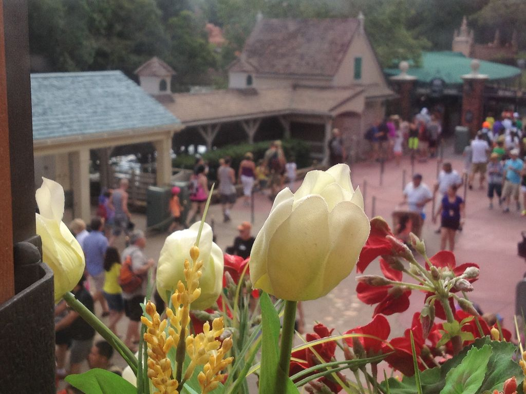 Flowers over Frontierland - wordless wednesday