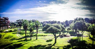 savannah - Animal Kingdom Lodge