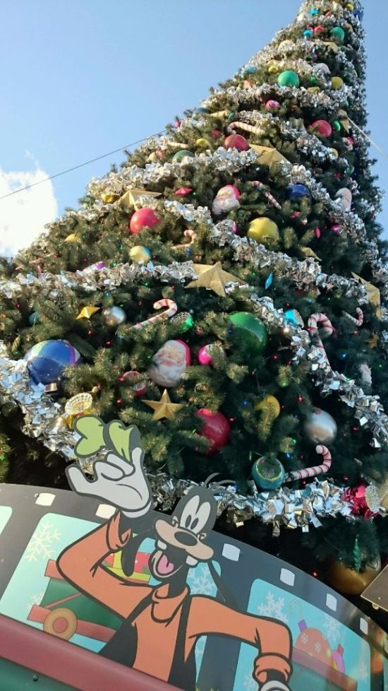 Gawrsh, The Tree is Pretty - Wordless Wednesday