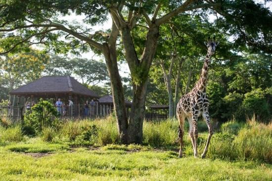 Adventure on the Wild Side at Disney's Animal Kingdom