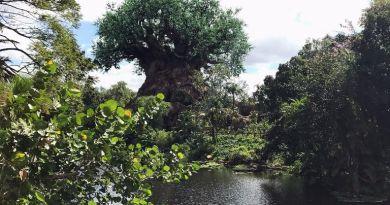 Tree of Life - Animal Kingdom Wordless Wednesday
