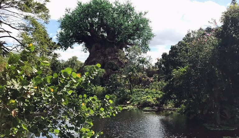 Tree of Life - Animal Kingdom Wordless Wednesday
