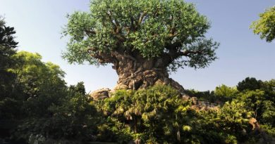 Disney Tree of Life Animal kingdom