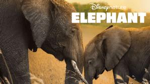 Disneynature elephants disney+