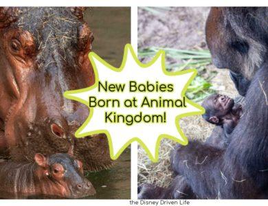 new babies animal kingdom