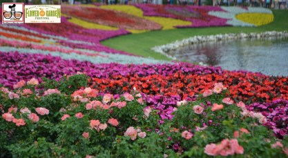 Festival Blooms up close - Epcot International Flower and Garden Festival 2015