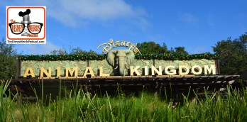 2015-12 - Animal Kingdom