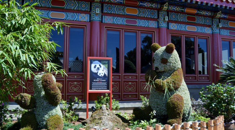 Born in China - at the Epcot Flower and Garden Festival