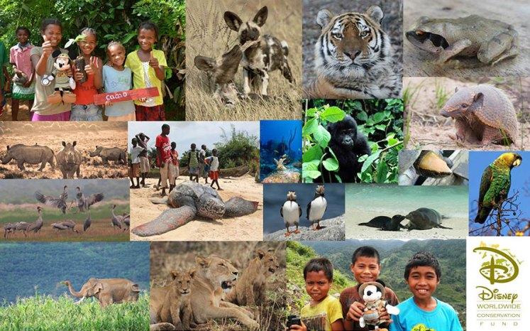 disney worldwide conservation fund